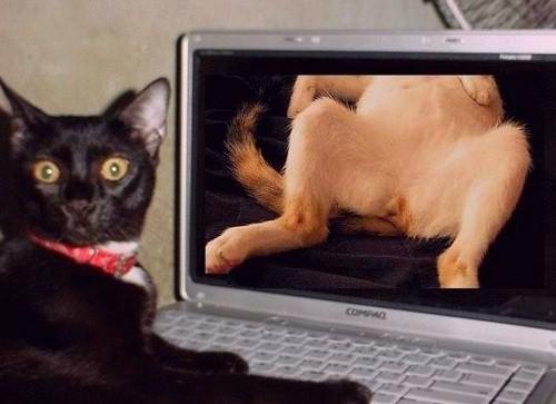 humor cats in hardcore 01