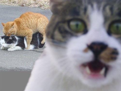 humor cats in hardcore 05
