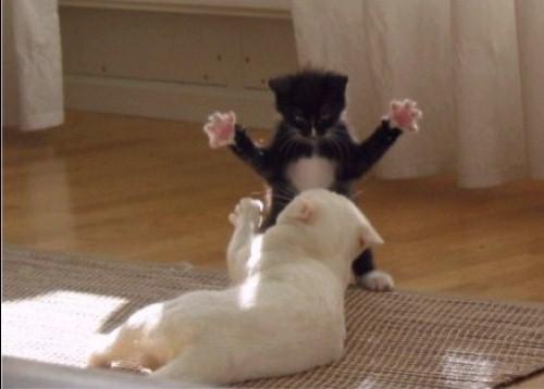 humor cats in hardcore 06