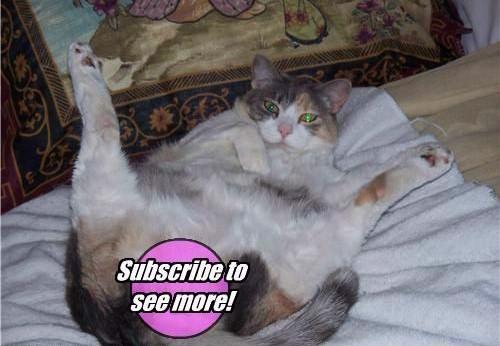 humor cats in hardcore 09